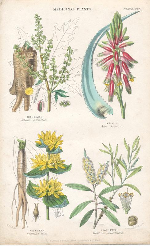 Set Of 4 Antique Prints Of Medicinal Plants 1860 S