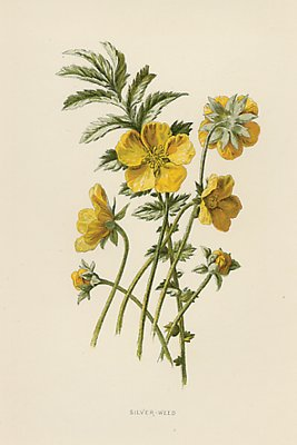Antique Flower Print Yellow Silver Weed