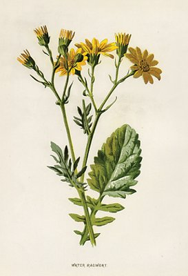 Antique Botanical Prints Set Of 4 Yellow Victorian Flowers