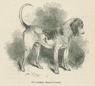 Vintage engraving three dogs