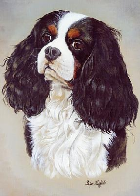 Print Of A King Charles Spaniel By The Dog Artist Brian