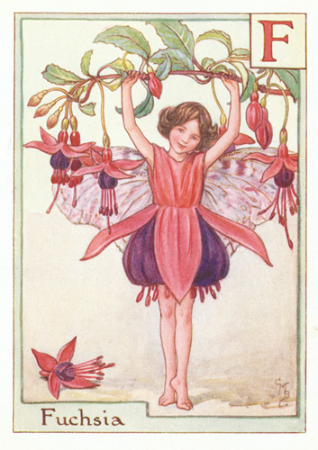 Antique Alphabet Flower Fairy Print, the Fuchsia