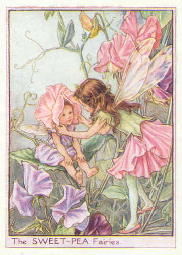 Flower Fairy Art Pink Purple And Lilac Antique Flower