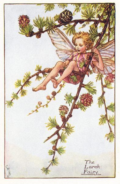 Antique Fairy Print, Larch Fairy, C M Barker Flower Fairies